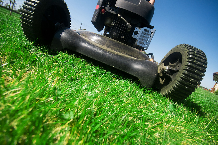 lawn maintenance mowing
