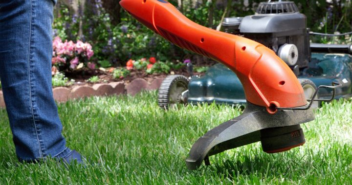 Grapevine, Lawn, Lawn Care, Garden, Gardening, Landscape, Landscaping
