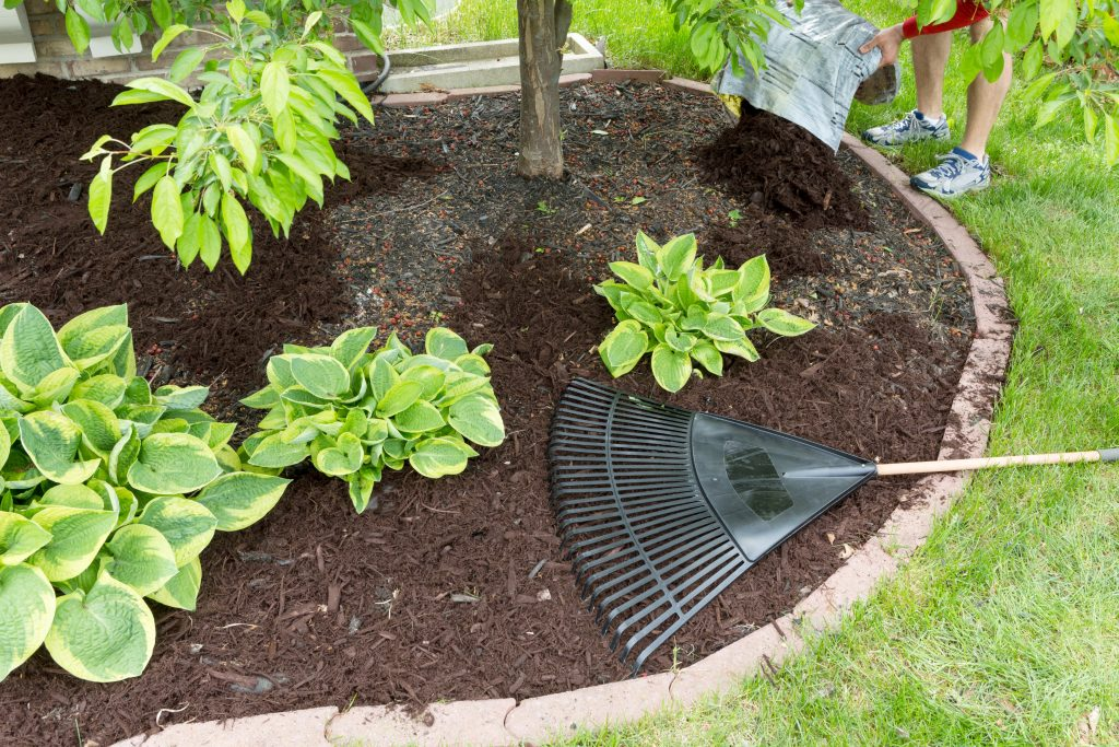 Grapevine, Scarification, Lawn, Lawn Care, Garden, Gardening, Landscape, Landscaping