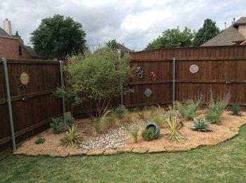 backyard xeriscaping